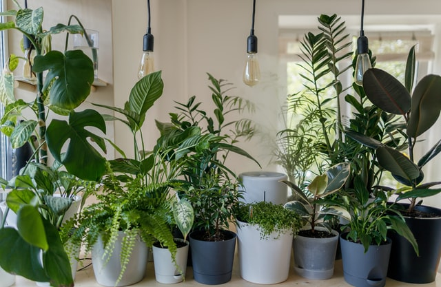 Ideas to embellish Indoor Plants in your front room